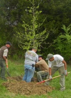 planting-a-tree 4